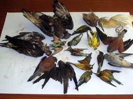 ВОЗ пересчитала в Китае всех диких птиц, погибших от гриппа