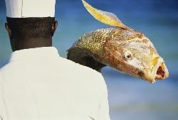 Целебные свойства рыбьего жира