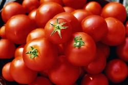 Лекарство от СПИДа ищут в помидорах